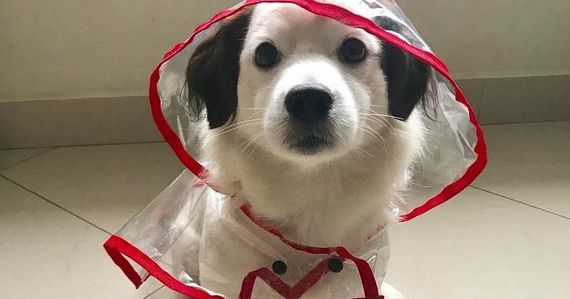 Ih choveu, e agora? Saiba o que fazer com seu pet em dias de chuva