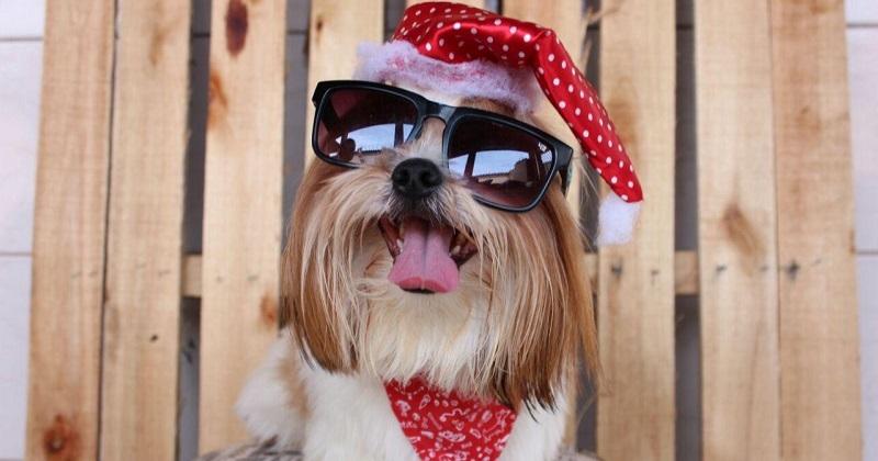 Top 10 dos Cachorros Prontos para o Natal