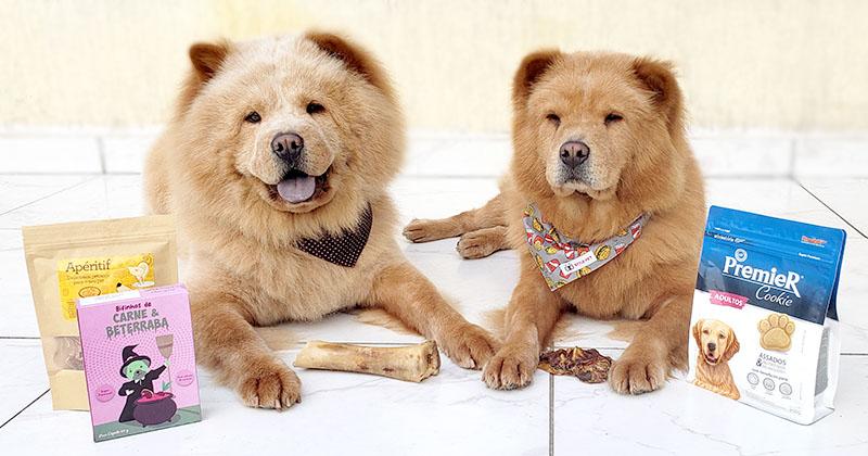 Como Escolher o Petisco Ideal Para o Seu Cão