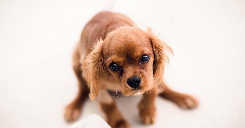 Esse casal tem problemas com um cachorro desobediente. Você pode ajudar?