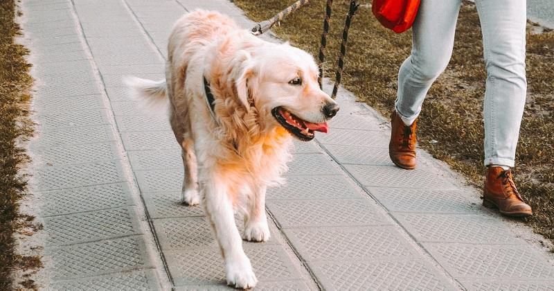 Por que devemos passear com nossos cães?