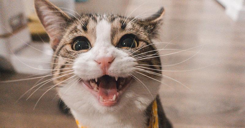 Arranhador Caseiro para Gatos