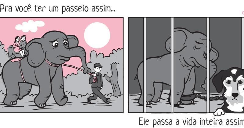 Do Cativeiro à Liberdade: Mudando a Vida de Elefantes Explorados pela Indústria Entretenimento