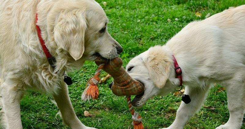 Cuidados com Brinquedos Caseiros para Cachorros