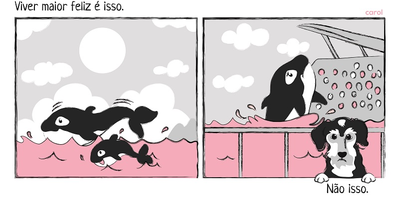 Por Que Shows Com Orcas São Cruéis