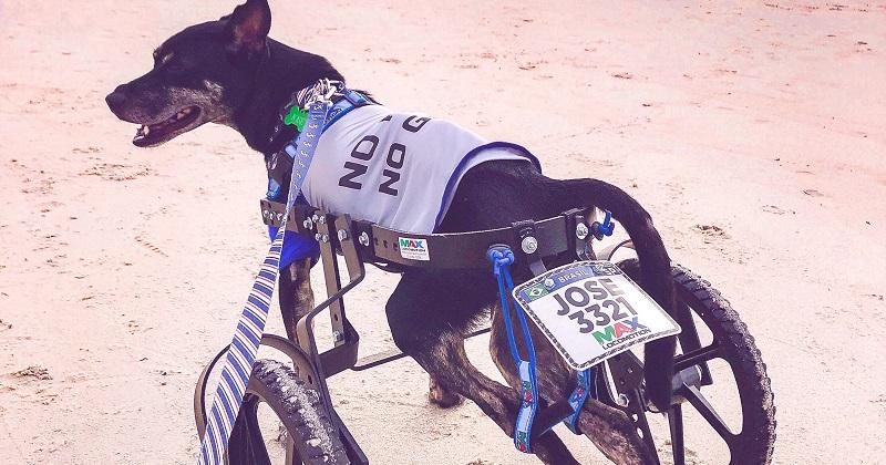 Adotei Um Pet Paraplégico, e agora?