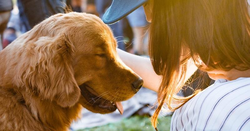 Será Que Você Está Pronto(a) Para Ter Um Cachorro?