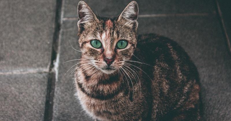Tudo Que Você Precisa Saber Sobre Comedouros Interativos Para Gatos
