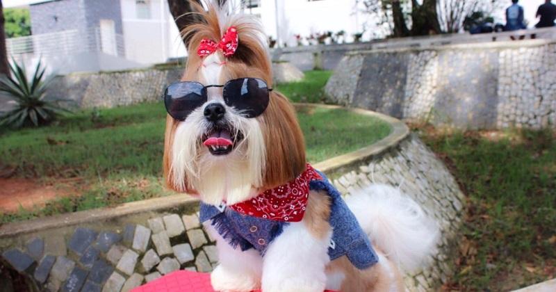 Seu Cãozinho com Estilo no Shopping