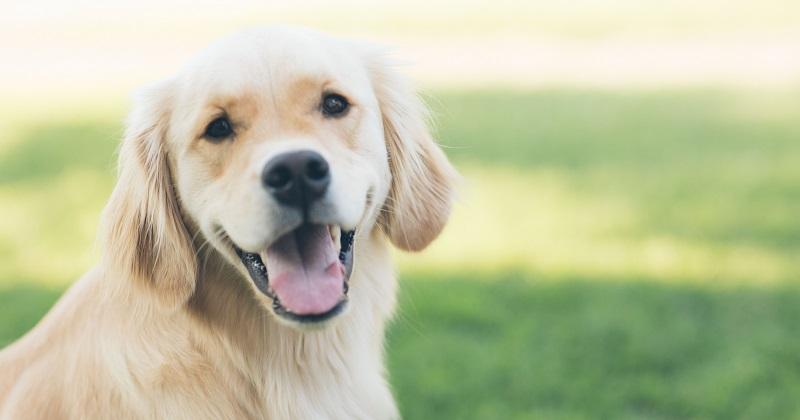 Periodontites x Higiene Bucal dos Pets