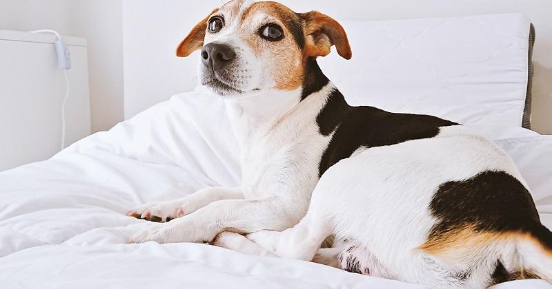 Cães e Gatos Podem Dormir na Cama?
