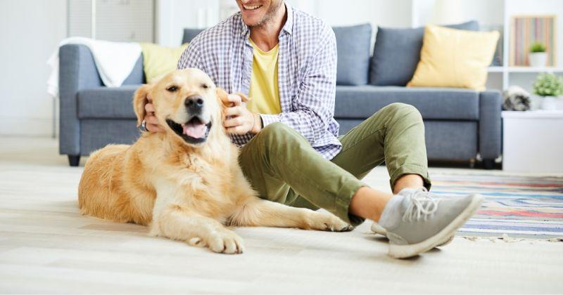 9 Exercícios Indoor Para Cansar Seu Cachorro