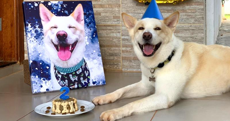 Dicas Para Aniversário Pet