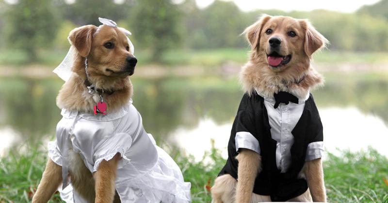 Casamento: Pajem E Daminha Pet!