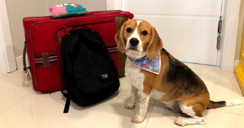 4 Dicas Para Viajar com seu Cachorro