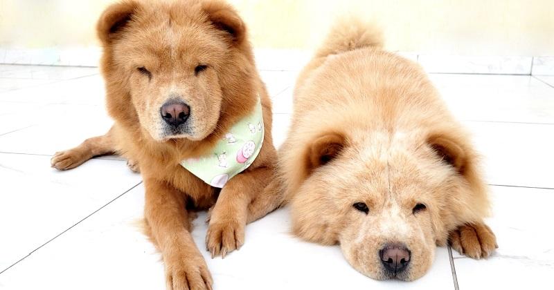 Como Adotar Cachorro: 7 Dicas Que Deram Certo