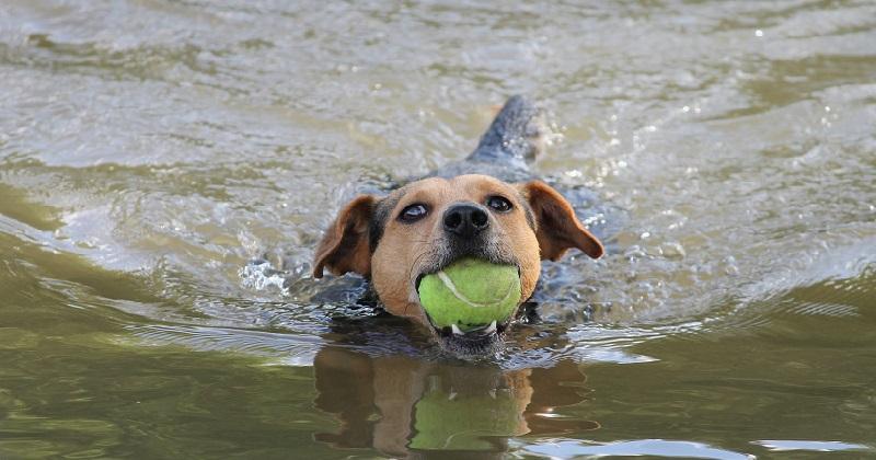 Esportes Caninos: Você Já Conhecia?