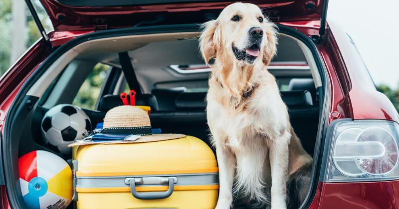Dicas Para Viajar com Pet de Porte Grande