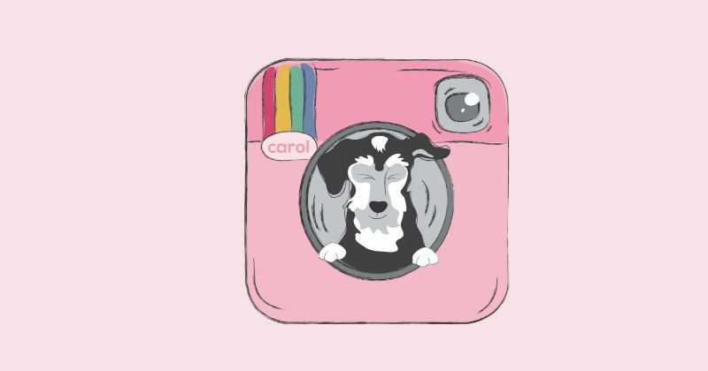 Ativismo Animal: 7 Perfis para Seguir no Instagram
