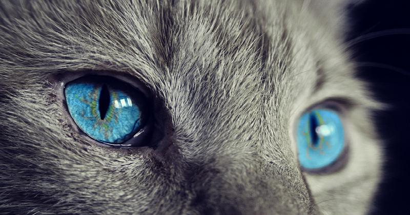 8 Inspirações no Pinterest Sobre Gatos