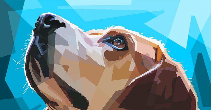 12 Inspirações no Pinterest pra Quem Ama Cachorro