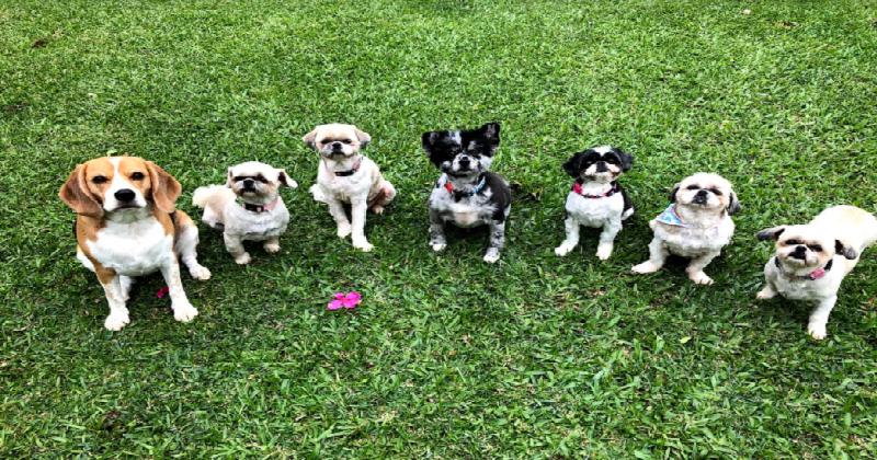 Ter Um ou Mais Cachorros? Confira Aqui Como Decidir