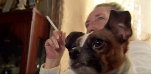 Pets e o Cigarro: Não Cometa Este Erro