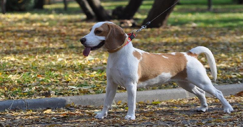 Você Topa Ser Um Embaixador da Causa Canina?