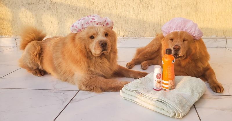 Problemas de Pele nos Cães, Como Evitar?