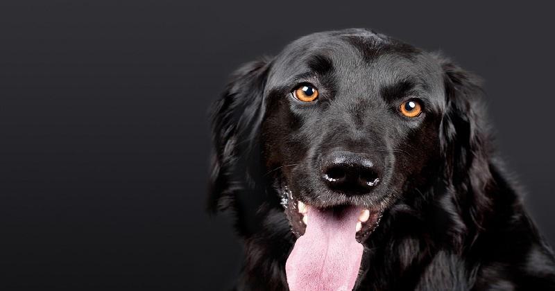 Como Cuidar da Saúde Bucal do Seu Cão
