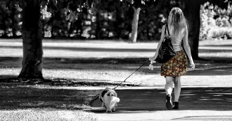 Os Treinamentos Essenciais que Todo Cachorro Deve Receber