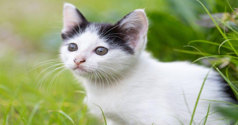 FIV e FeLV: Conheça as Doenças em Felinos