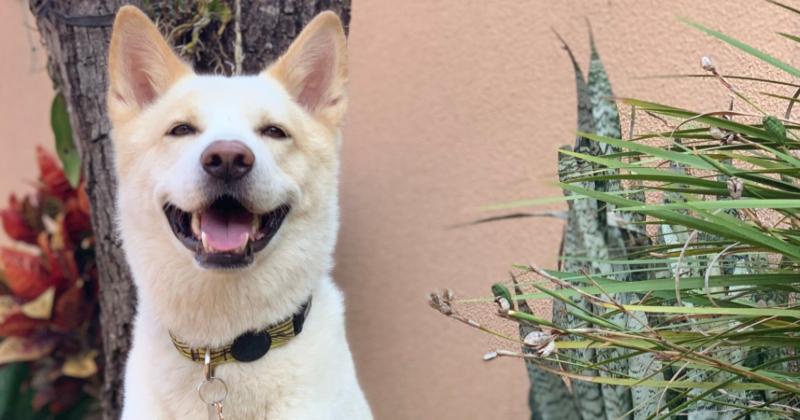 Cor da Coleira dos Cães Pode Alertar Sobre sua Personalidade