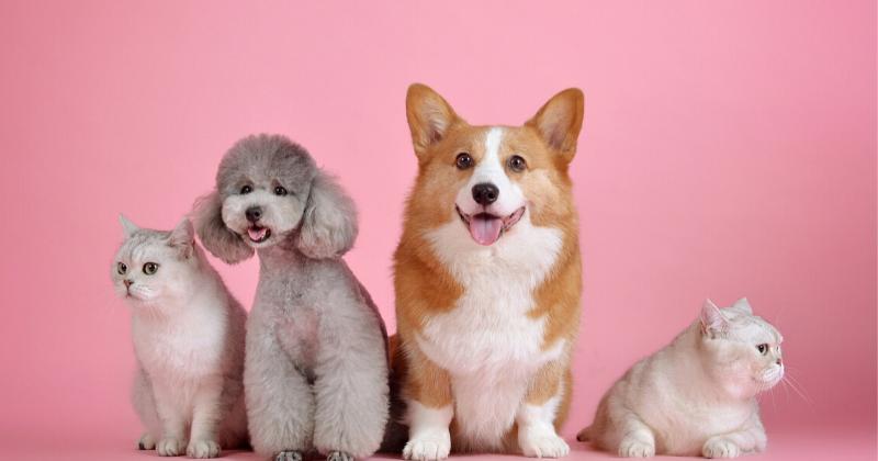 Outubro Rosa Pet: Cuide da sua Amiguinha de 4 Patas