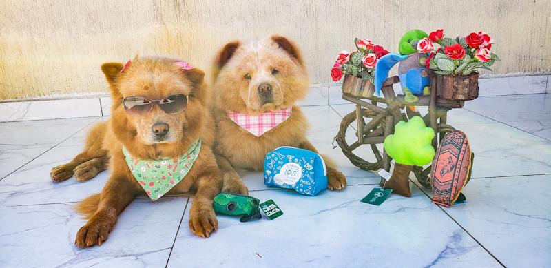 Dicas de Cuidados com seu Pet no Calor