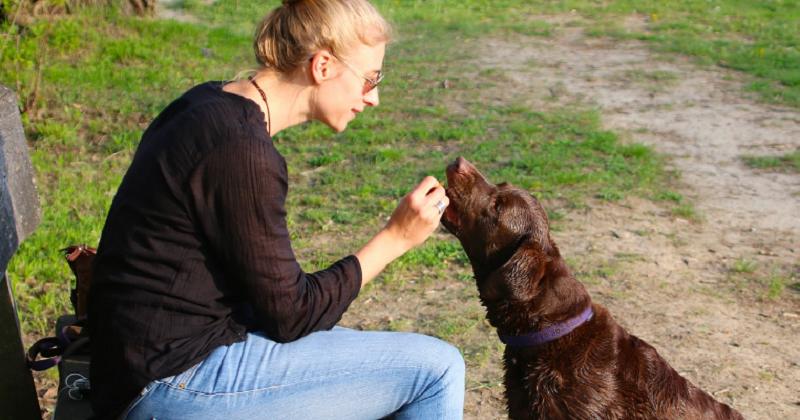 Motivação: O Segredo Para Manter Seu Cão Interessado em Aprender
