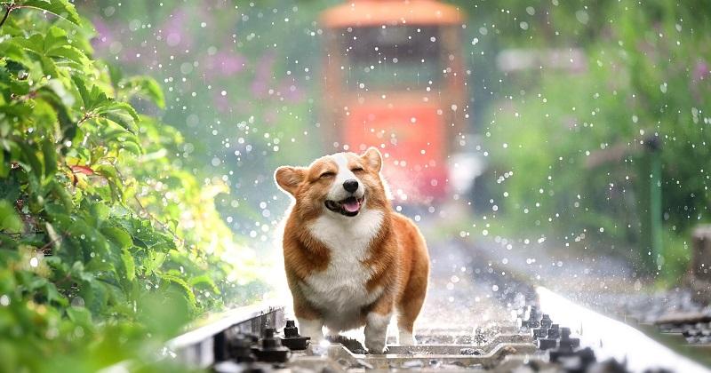 O Que É Enriquecimento Ambiental para Cães? Venha Descobrir!
