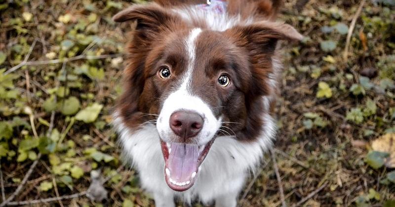 Conheça os Tipos de Enriquecimento Ambiental para Cachorros