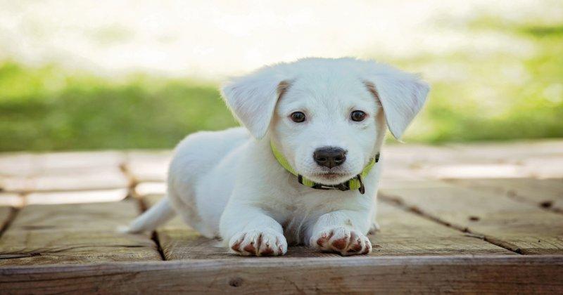 Xixi e Cocô: 15 Dicas para Facilitar o Acerto do Seu Cão