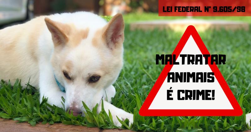 Maltratar Animais É Crime!