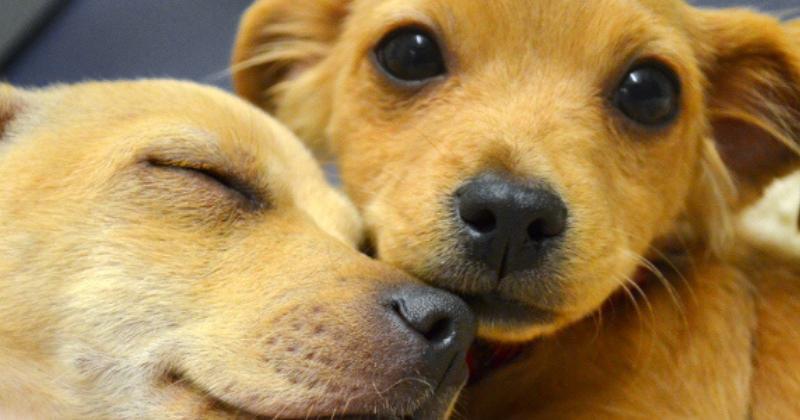 Por Que Adotar É Tudo de Bom? – Veja 5 Motivos para Adotar um Pet!