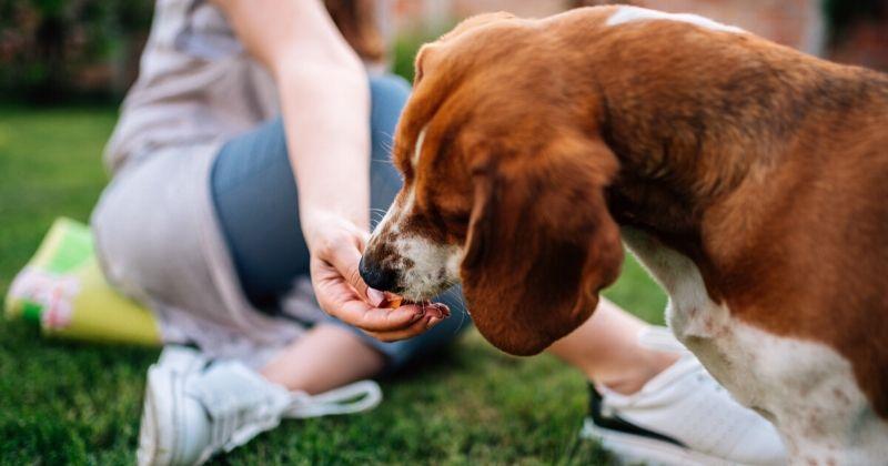 Como Escolher os Melhores Petiscos para Cachorro?