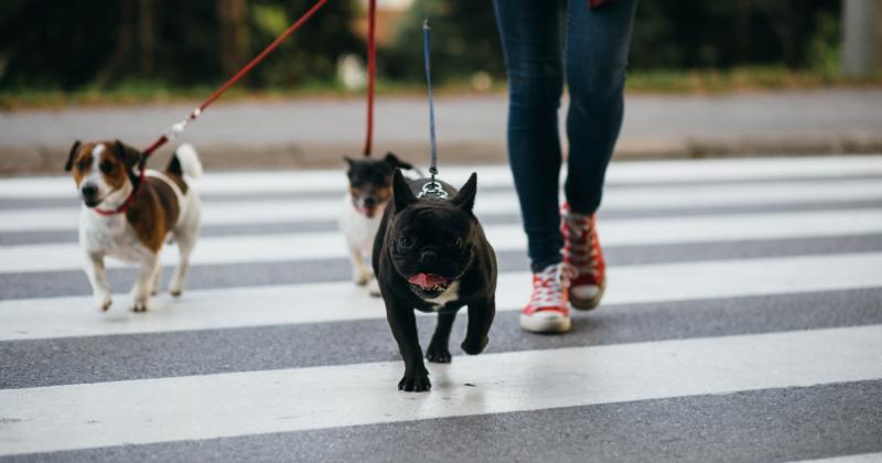 5 Dicas para Você Não Matar Mais os Passeios Com Seu Cachorro