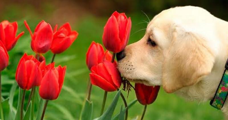 8 Plantas Tóxicas Para os Cães