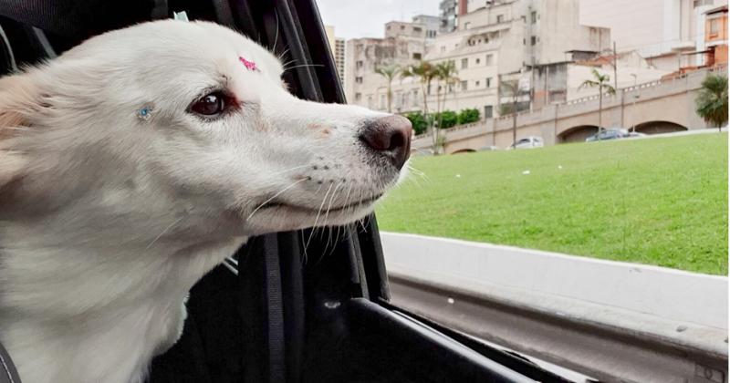 5 Motivos Para Passear com Cachorro