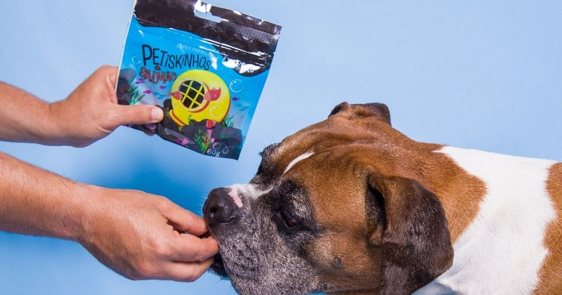 Saiba Por que a Petiko tem o Petisco para Cachorro que Você Procura (e Seu Pet Merece)