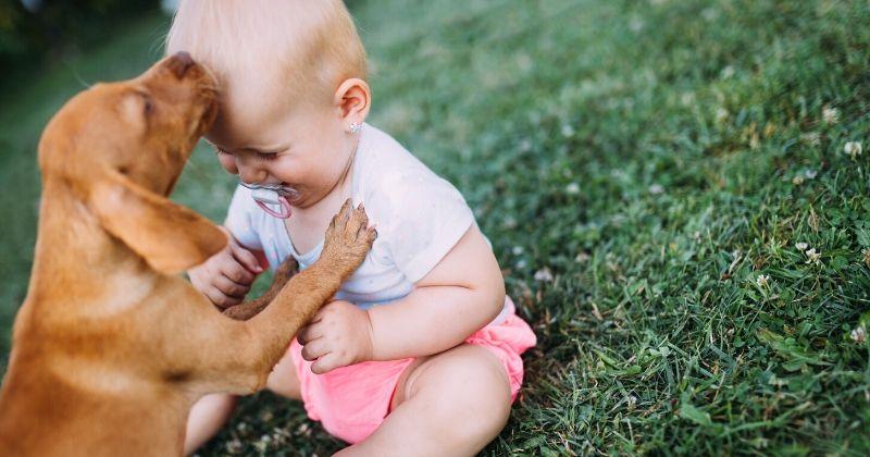 6 Dicas de Como Apresentar Seu Cachorro ao Seu Novo Bebê