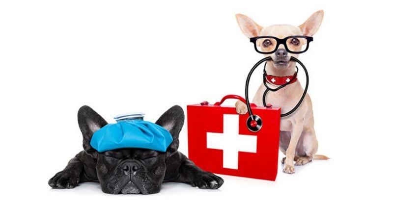 A Importância de Estar Preparado para Situações de Emergência com Seu Pet