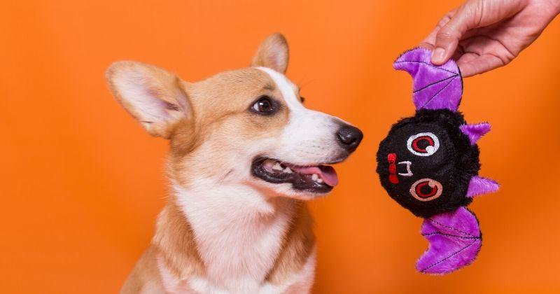 Ateliê Petiko: Conheça o Processo Criativo dos Brinquedos para Cachorro