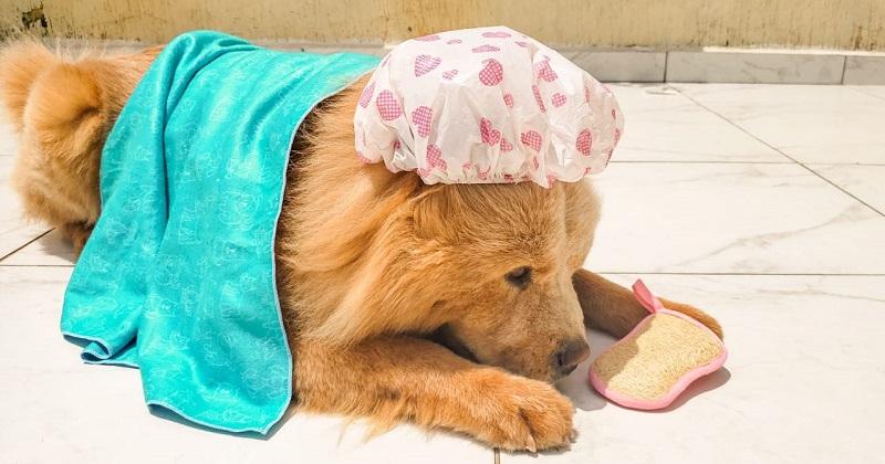 Shampoo Para Cachorro Não É Frescura